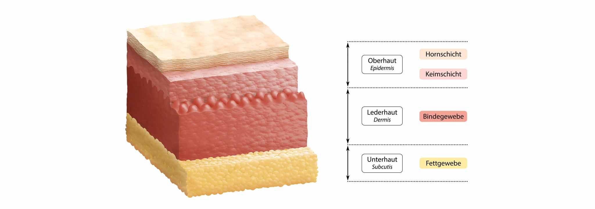 ceramol-hautpflege-aufbau-haut-barriere